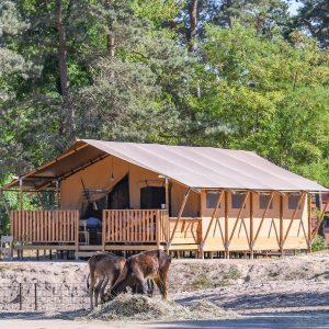 Safaritent in vakantiepark Beekse Bergen